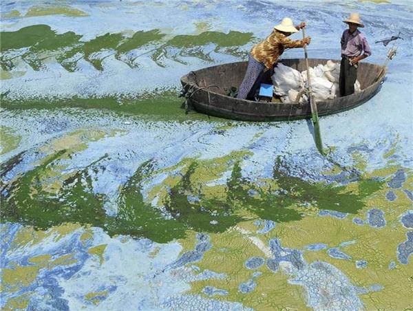 Hồ Sào chứa nhiều loại tảo ở Trung Quốc. (Ảnh: Reddit)