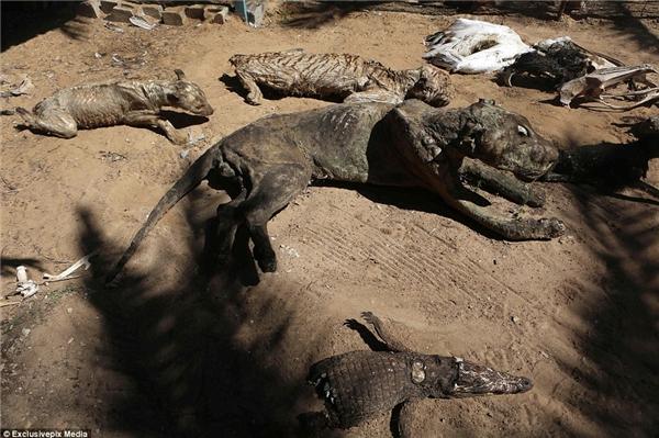 Cuộc chiến giữa Israel và Palestine nổ ra vào năm 2014 tiếp tục giết chết thêm nhiều con vật trong sở thú ở Gaza này.(Ảnh: Daily Mail)