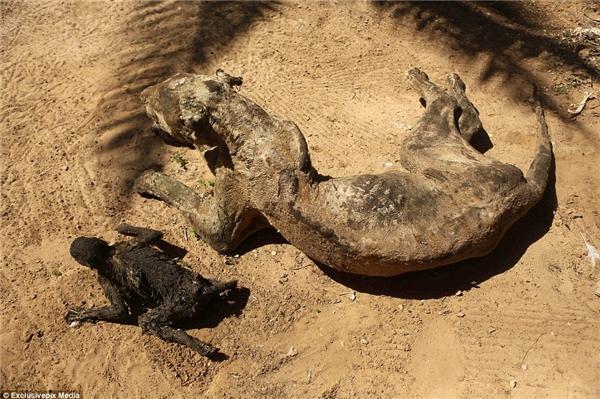Trong cuộc tấn công kéo dài ba tuần nhằm đáp trả tên lửa tấn công vào Israel này, Awaida nói rằng ông không thể đến sở thú, do đó nhiều loài động vật đã chết vì bị bỏ rơi và chết đói.(Ảnh: Daily Mail)
