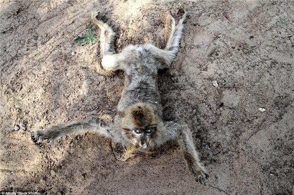 Rất nhiều động vật vô tội đã chết trong trận chiến ở Gaza.(Ảnh: Daily Mail)