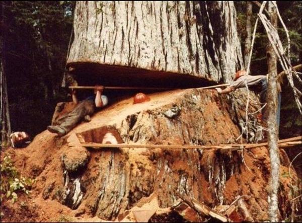 8. Chẳng lẽ không còn cách khác nào để đo đường kính thân cây à?