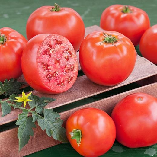 Cà chua có chứa rất nhiều chất làm sáng da, nó hấp thu hết chất nhờn và làm sạch các lỗ chân lông trên da. (Ảnh: Internet)