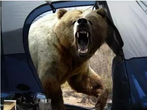 Bức ảnh này được chụp bởi nhiếp ảnh giaMichio Hoshino chỉ vài giây trước khi bị một con gấu lớn tấn công. Theo phản xạ của một nhiếp ảnh gia chuyên nghiệp, điều đầu tiên mà ông làm là chụp ảnh thay vì...chạy trốn. (Ảnh:Michio Hoshino)