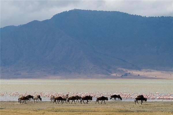 Khá ít động vật sống được ở đây, ngoại trừ ngựa vằn, bò rừng... (Ảnh: Internet)