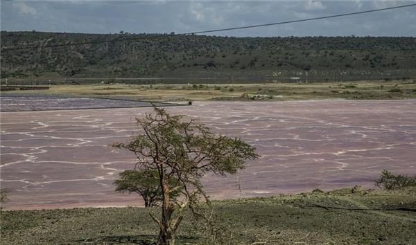 Muối ở đây được khai thác để làm nhiều việc, trong đó có cả cho ngành sản xuất nước ngọt. (Ảnh: Internet)