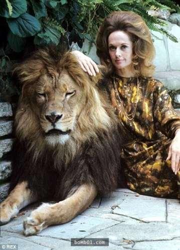 Nữ diễn viên TippiHedren và chú sư tử Neil. (Ảnh: Internet)