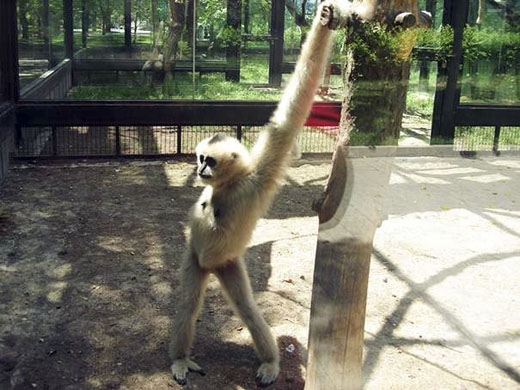Chẳng những chân dài, nàng mẫu khỉ này còn sở hữu một đôi tay đáng ngưỡng mộ. (Ảnh: Internet)