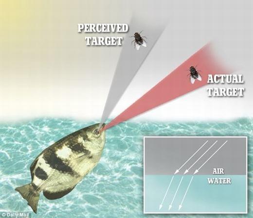 Loài cá này có khả năng nhìn và phán đoán mục tiêu cực tốt. (Ảnh: Internet)
