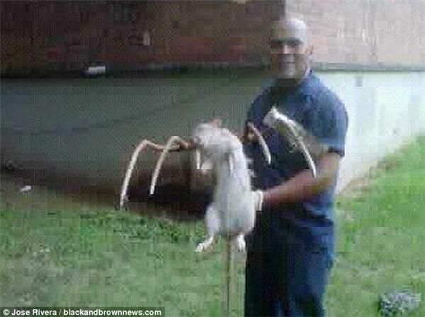 Một người tên Jose Rivera đã bắt được một con chuột khổng lồ dài gần 1m tại Brooklyn vào năm 2011. (Ảnh: Daily Mail)
