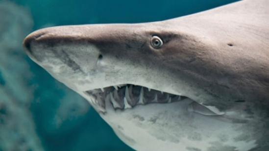 Giác mạc cá mập có thể thay thế giác mạc của người.