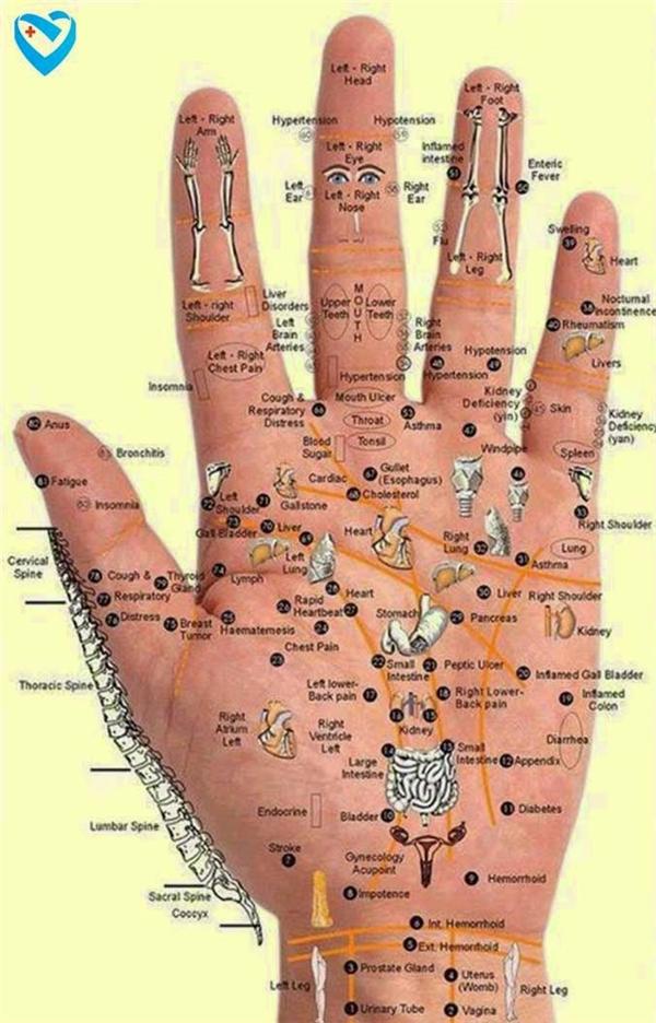 Y học cổ truyền Trung Quốc cho rằng 5 ngón tay tương ứng cho các cơ quan nội tạng. (Ảnh: Internet)