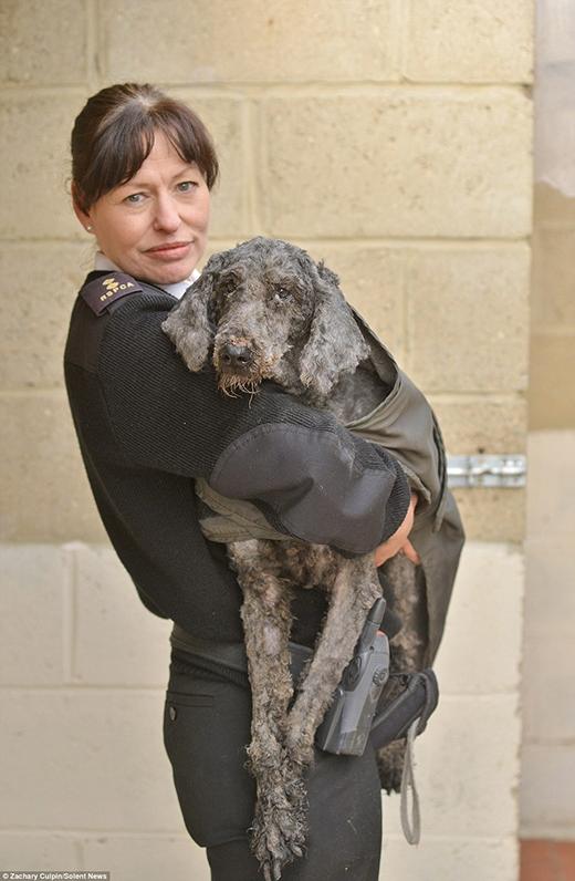 Tội nghiệp những chú chó bị bỏ rơi trông như giẻ lau nhà