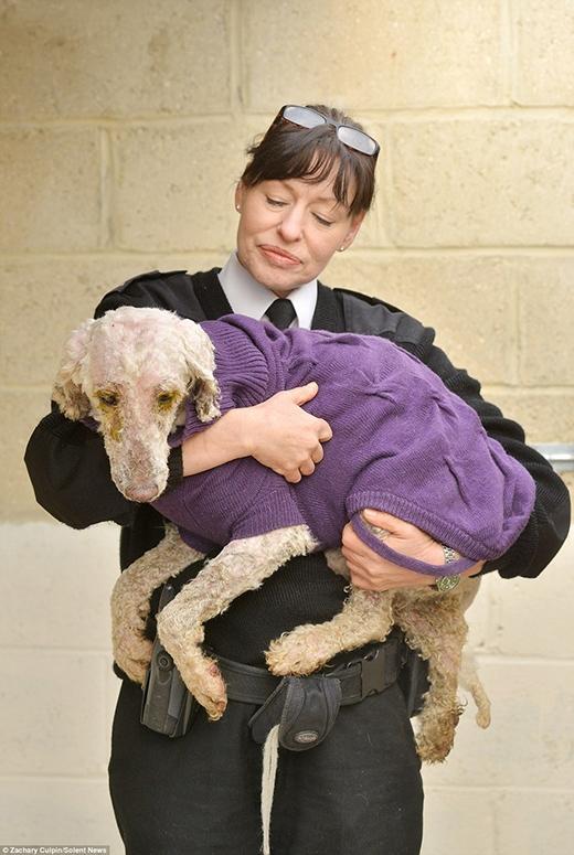 Thanh tra Jan Edwards thuộc RSPCA đang ôm hai trong số những chú cún. (Ảnh: Internet)