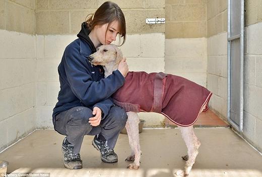 Nhân viên Phúc lợi Động vật thuộc Hội đồng Thành phố Winchester, May Carrington, đang chăm sóc cho chó mẹ. (Ảnh: Internet)