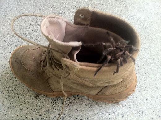 Rất nhiều trường hợp phát hiện ra nhện trong đế giày. (Ảnh: Internet)