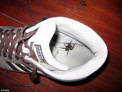 Do đó, hãy kiểm tra kĩ lưỡng trước khi cho giày vào chân để tránh hậu quả đáng tiếc. (Ảnh: Internet)