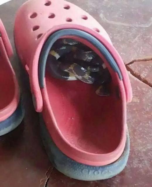 Bên cạnh đó, việc thời tiết ẩm ướt, giày dép là nơi trú ngụ của những con rắn nhỏ... (Ảnh: Internet)