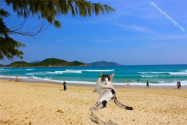 Biển Phan Rang à, anh đến với em đây.(Ảnh: Internet)