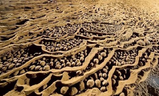 """Hàng triệu viên """"ngọc trai khổng lồ"""" được hình thành nhờ dòng chảy qua hàng trăm năm."""