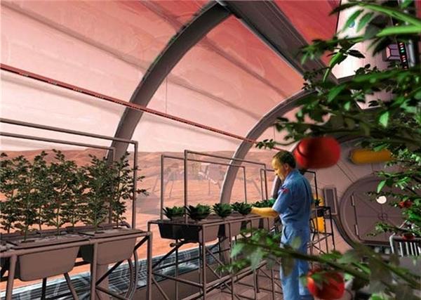 Viễn cảnh trồng cây trong không gian mà con người đang mơ ước