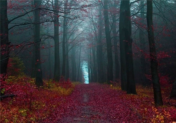 Chỉ là rừng thôi mà, có cần đẹp muốn xỉu vậy không?