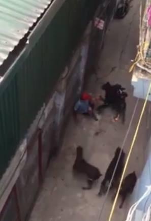 Anh Duy bị 4 con chó hung hãn vây quanh. (Ảnh: Cắt từ clip)