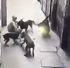 Tranh cãi quanh vụ người đàn ông bị 4 con chó cắn là chủ hay trộm?