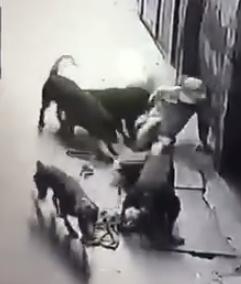 Hình ảnh người đàn ông bị 4 con chó tấn công dữ dội. Ảnh: Cắt từ clip