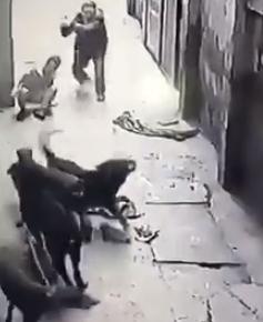Người đàn ông cầm gậy tới đuổi đánh đàn chó để giải cứu nạn nhân. Ảnh: Cắt từ clip