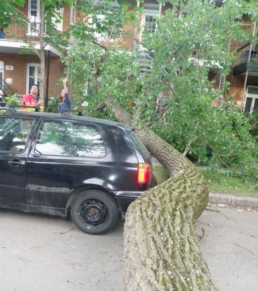 Phải chăng... thân cây và thân sau xe sinh ra là đểdành cho nhau?! (Ảnh: Internet)