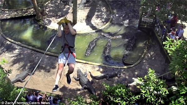 Vườn thú St. Augustine Alligator Farm Zoological Park ở Florida có lẽ là nơi duy nhất mang đến cho khách tham quan trải nghiệm được đu dây qua một hồ đầy cá sấu bên dưới.(Ảnh: Daily Mail)