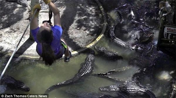 Du khách được nhìn ngắm những con quái vật dưới nước từ trên cao.(Ảnh: Daily Mail)