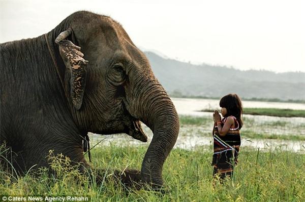 """Cô bé Kim Luan bên """"thú cưng"""" – chính là chú voi khổng lồ mà cô bé đã thuần phục được."""