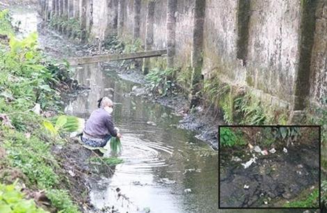 Rùng mình với cảnh rửa rau dưới dòng kênh đầy phân lợn