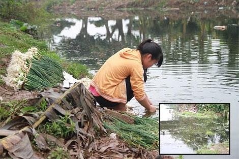 Dưới dòng kênh đầy phân bò, phân lợn, vỏ chai thuốc trừ sâu. Ảnh: Internet