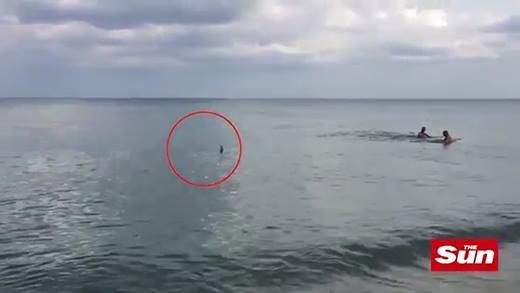 Hoảng loạn với khoảnh khắc cá mập bơi sát du khách giữa biển