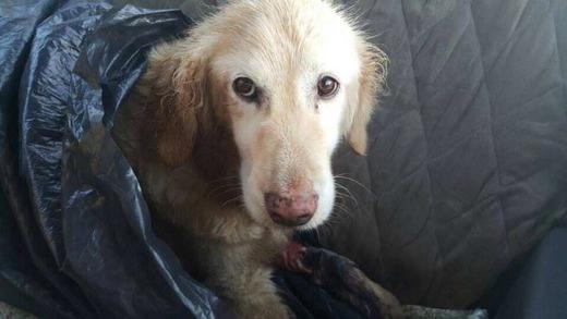 Chì vì ăn không được, Kiki đã bị ném thẳng ra bãi rác không thương tiếc. (Ảnh: Internet)