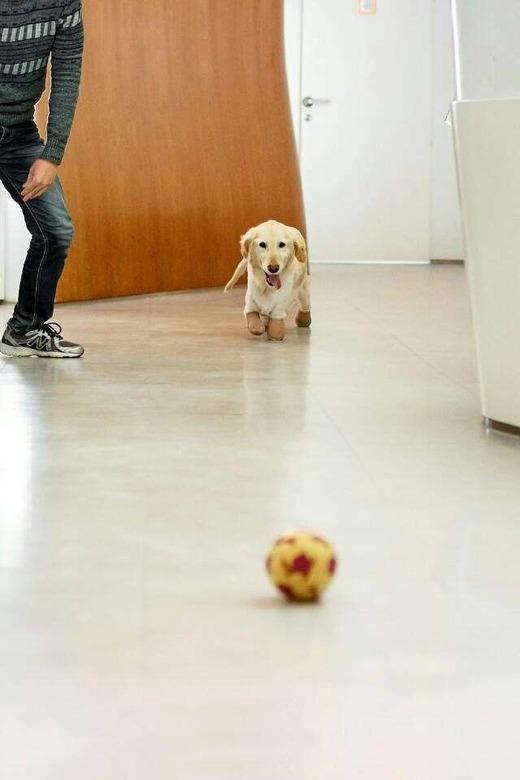 Như bao chú chó khác, Kiki rất thích chơi nhặt banh. (Ảnh: Internet)
