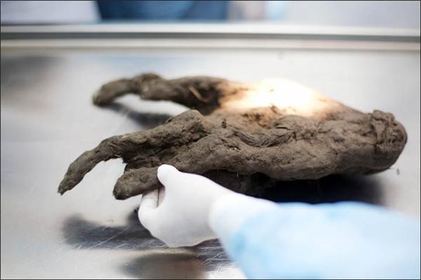 Bộ não xác ướp chó 12.400 tuổi còn nguyên vẹn nên có thể tái sinh?