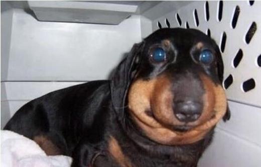Em cún này trông cứ như một nhân vật hoạt hình mà không ai ngờ có thể xuất hiện ngoài đời thật. (Ảnh: Internet)