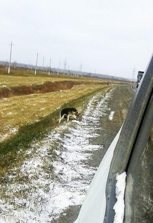 Nhiều người đi đường ném đồ ăn cho nó qua cửa sổ. Nhờ vậy mà chú chó vẫn sống sót qua mùa đông lạnh giá. (Ảnh: Internet)