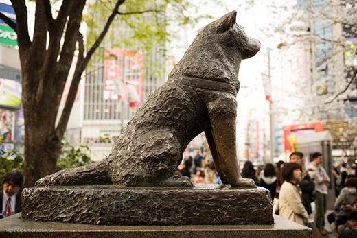 Bức tượngHachikobằng đồng trước ga Shibuya ở Nhật. (Ảnh: Internet)