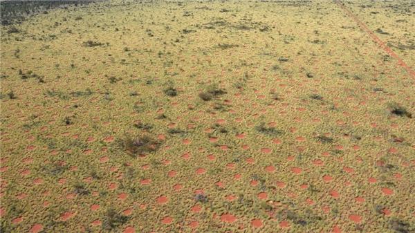 Những vòng tròn kì lạ này xuất hiện ở vùng ngoại ô miền tây nước Úc.(Ảnh: Mashable)