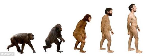 Gân taylà bằng chứng cho thấy chúng ta tiến hóa từ động vật leo trèo. (Ảnh: Internet)