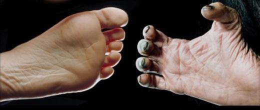 Bàn chân của người và tinh tinh. (Ảnh: Internet)