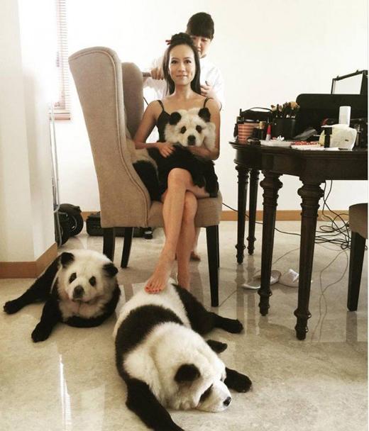 Jiang khẳng định cô luôn chăm sóc những chú thú cưng của mình ở trong điều kiệntốt nhất.(Ảnh: Internet)