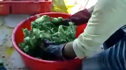 Những chú gà con lông vàng đứng chen chân lúc nhúc trong một chiếc chậu nhựa. (Ảnh: Internet)