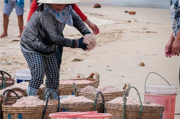 Bà con ngư dân đang bốc những con ruốc đã được nhuộm đỏ khỏi thùng thuốc. (Ảnh: NVCC)