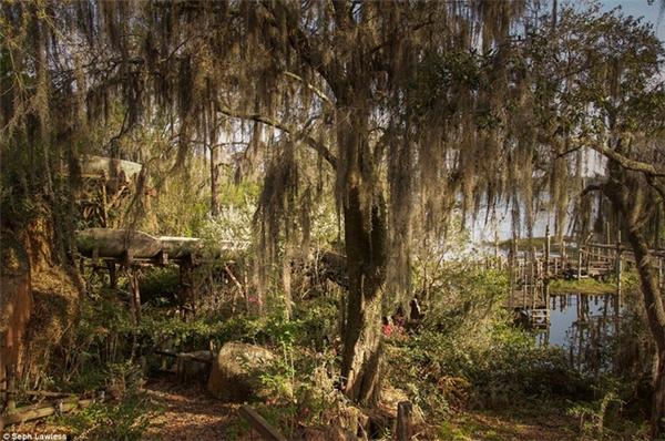 River Country, công viên nước đầu tiên của Walt Disney World, mở cửa vào năm 1976 và bị bỏ hoang vào năm 2001.