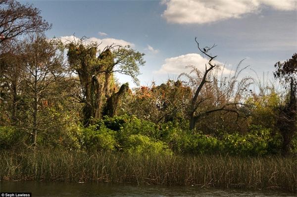 Những cành cây ở đảo Discovery như bàn tay khẳng khiu xòe ra.